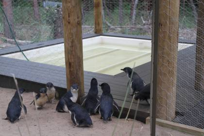 Penguin/Seabird Enclosure